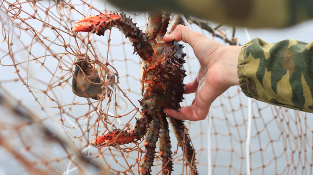 Featured Image For Best Bait for Crabbing