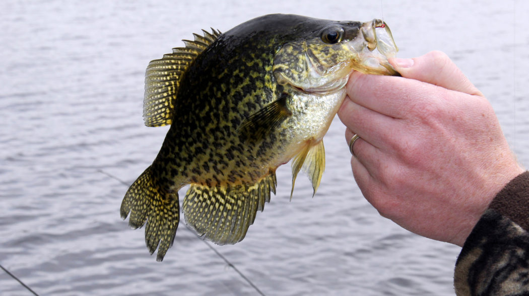 Featured Image For Summer Crappie Fishing Tips
